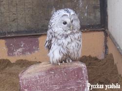 В парке птиц «Воробьи». Фото И.Зеленцова